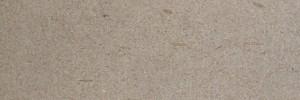 arenaria fossile szczotkowany